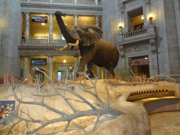 Washington Naturkundemuseum