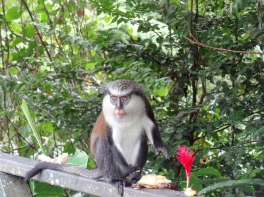 Grenada - Tierischer Besuch