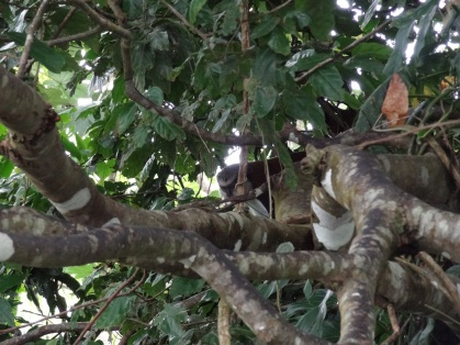 Grenada - Wer sitzt da im Baum