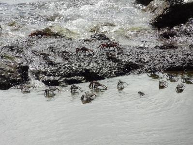 Tobago - Krebse
