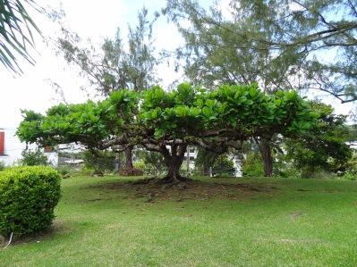 Tobago - Natur